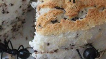 One Thousand Ants - Angel Food Cake