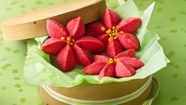 Raspberry Poinsettia Blossoms
