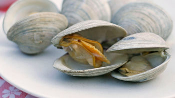 Beer-Steamed Clams on a Gas Grill