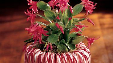 Candy Cane Planter