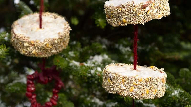 PB and J Bird Feeder Treat